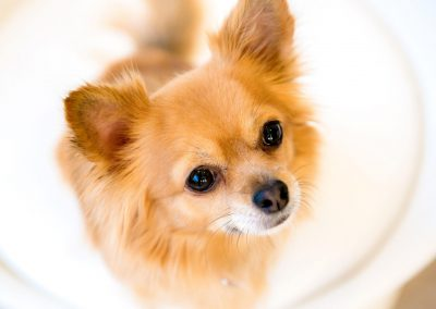 honden_trimsalon_venlo_19