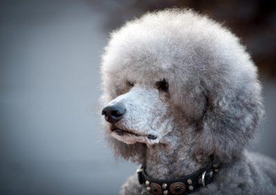 honden_trimsalon_venlo_24