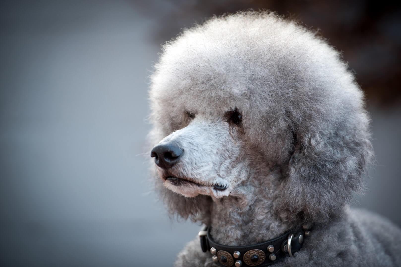 Foto 39 s honden trimsalon kapper venlo blerick tegelen velden doggies voice - Foto van sallon ...