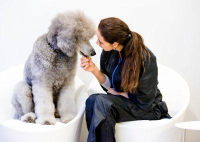 honden_trimsalon_venlo_27