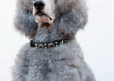 honden_trimsalon_venlo_32